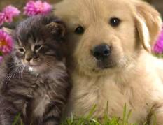 Segítség állatainknak