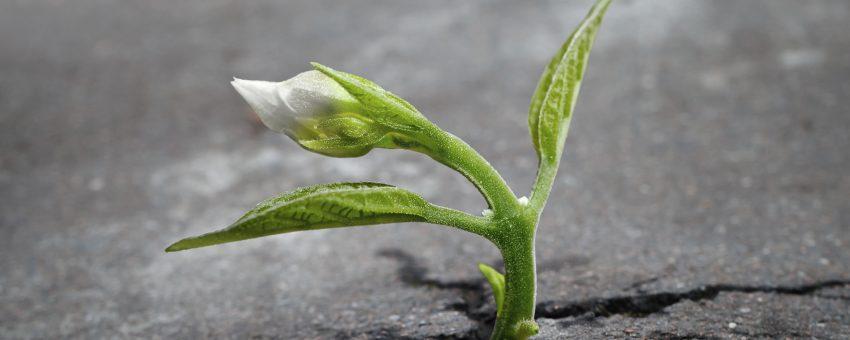 Hogyan sikerül a Túlélés helyett az Élést választanod?